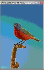 birdfinal.jpg