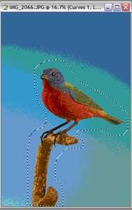birdlasso.jpg